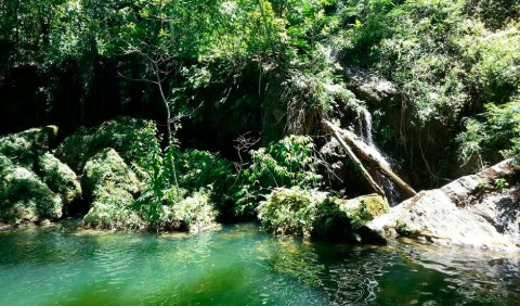 Foto de um rio cercado de vegetação verdinha